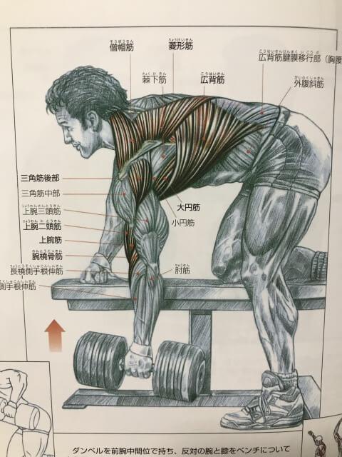 ワンハンドローイングをする男性の解剖図